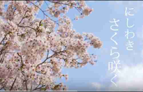 動画 にしわき桜さく