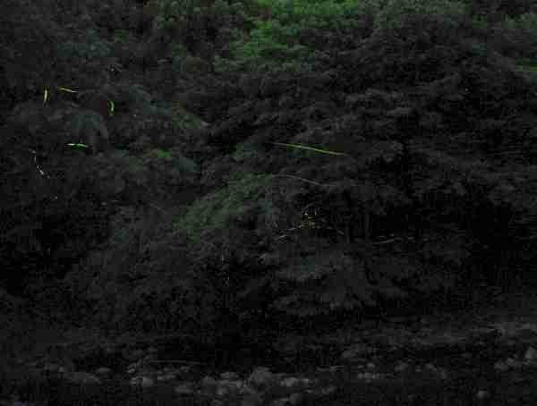170609 【レポート】あじさい園とホタルをめぐる夜のバスツアー