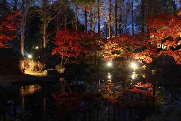 11/10~23 『紅葉ライトアップ』:多可町余暇村公園