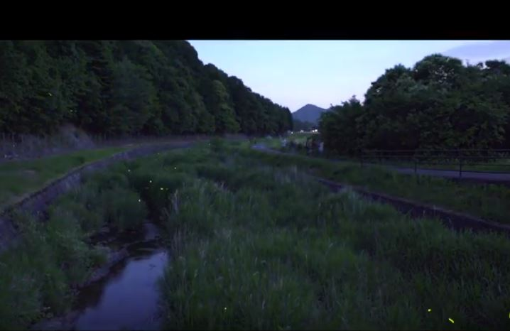 北はりまのホタル情報② 畑谷川のホタル