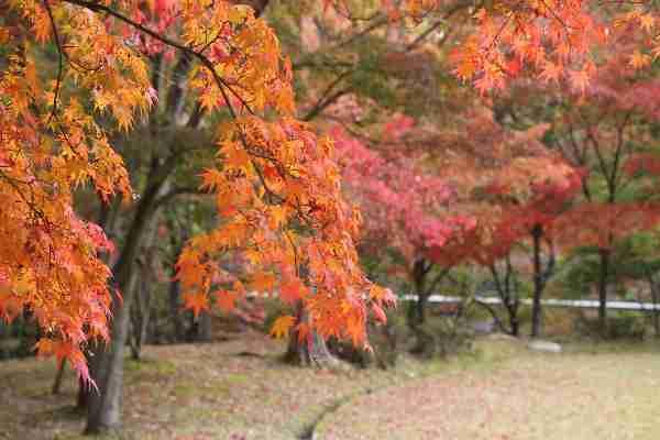 10日~ 紅葉のライトアップ:多可町余暇村公園