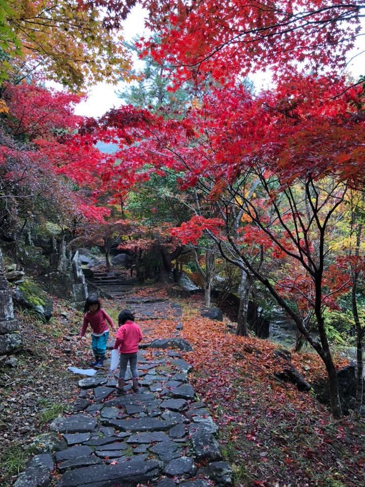 多可町の紅葉情報:竹谷山