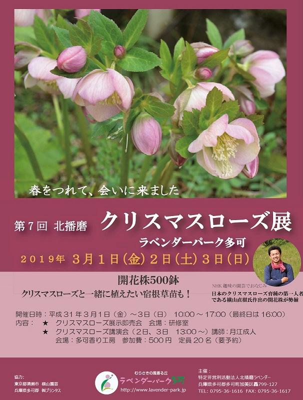 3/1~3 第7回北播磨クリスマスローズ展:ラベンダーパーク多可