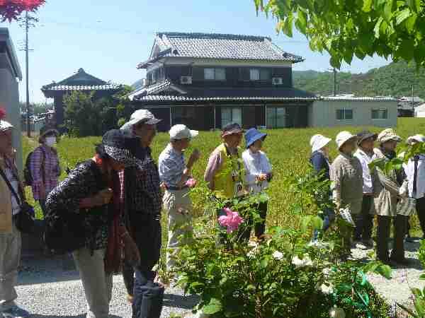 190511 【レポート】散歩道「初夏の爽やかな青空もと、日本一長い散歩道(中区)をウオークしよう」