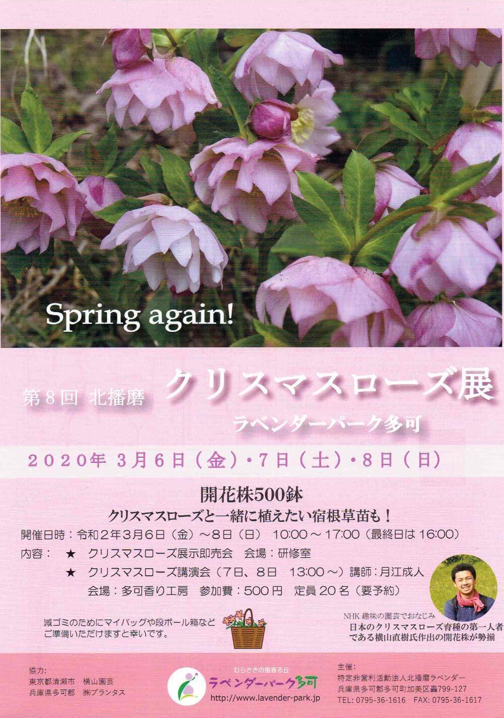 3/6~8 第8回北播磨クリスマスローズ展示即売会:ラベンダーパーク多可
