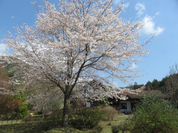 春の花だより⑦