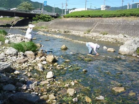 200607 【レポート】身近な水環境の全国一斉調査報告