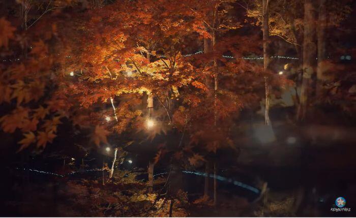 多可町余暇村公園のライトアップ