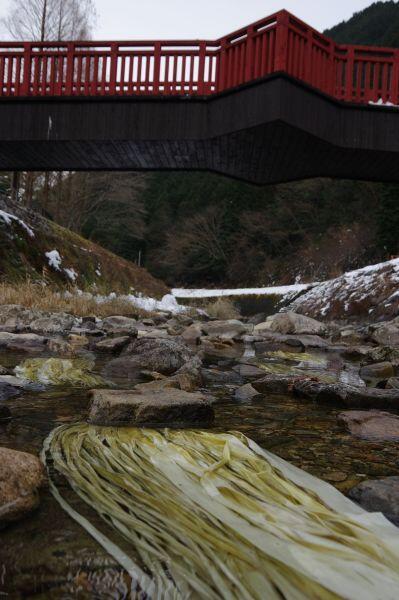 ~2月下旬ごろ 楮(こうぞ)の川さらし:杉原紙研究所