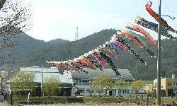 天神池の鯉のぼり.jpg