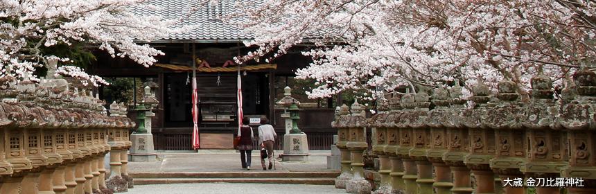 大歳金刀比羅神社の桜