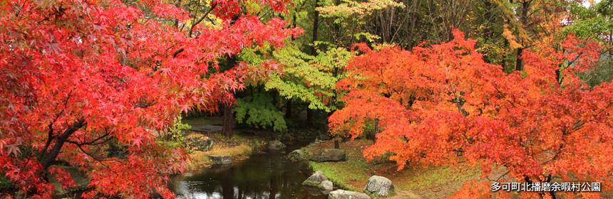 余暇村公園の紅葉