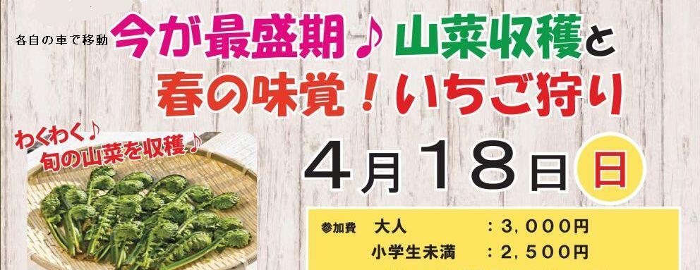 4/18 いちご狩りと山菜収穫体験