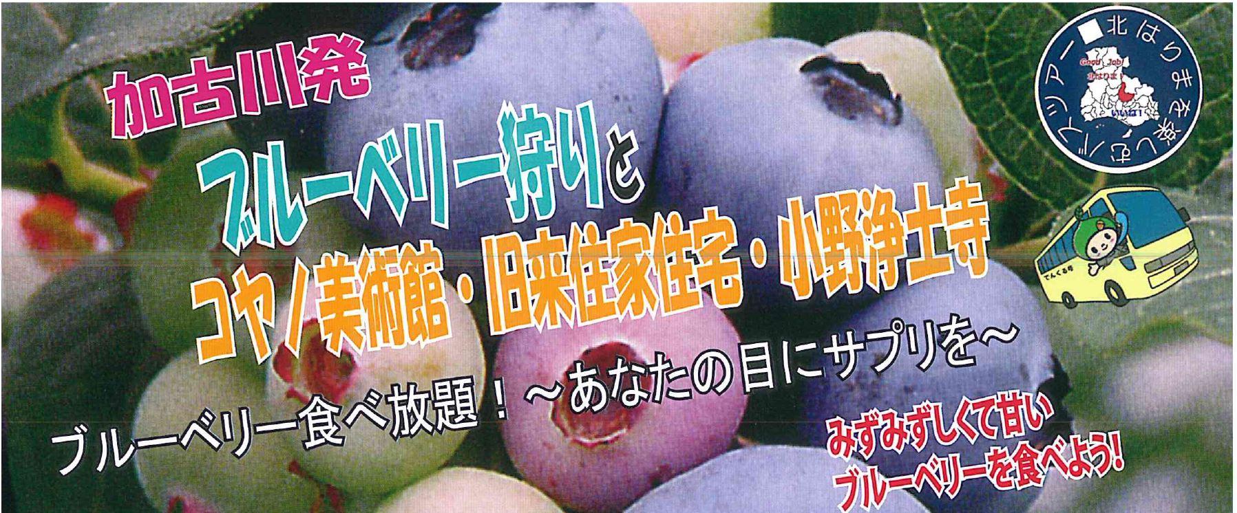 加古川発ブルーベリー狩りバスツアー(5/23)